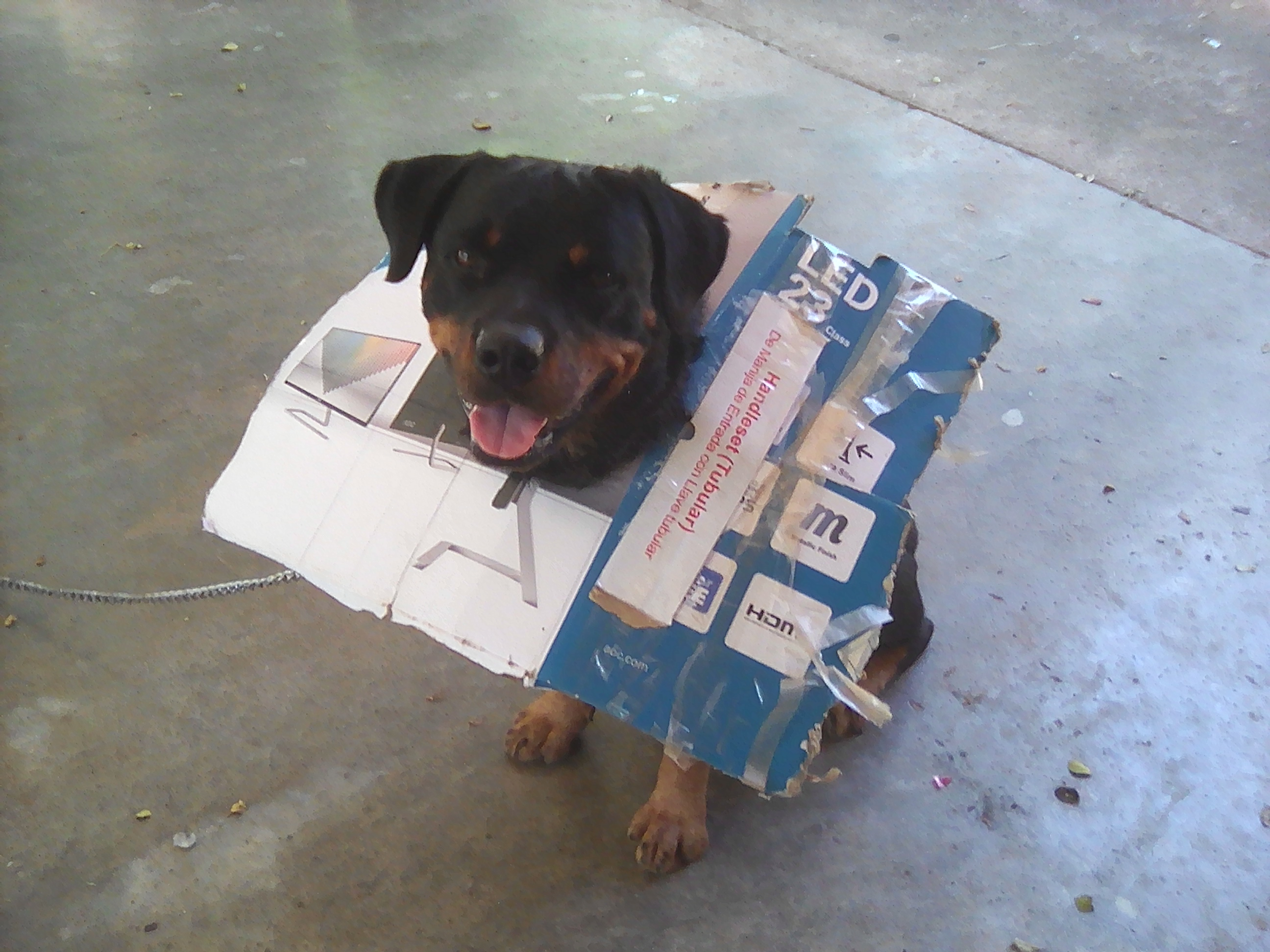 Arf with carton.