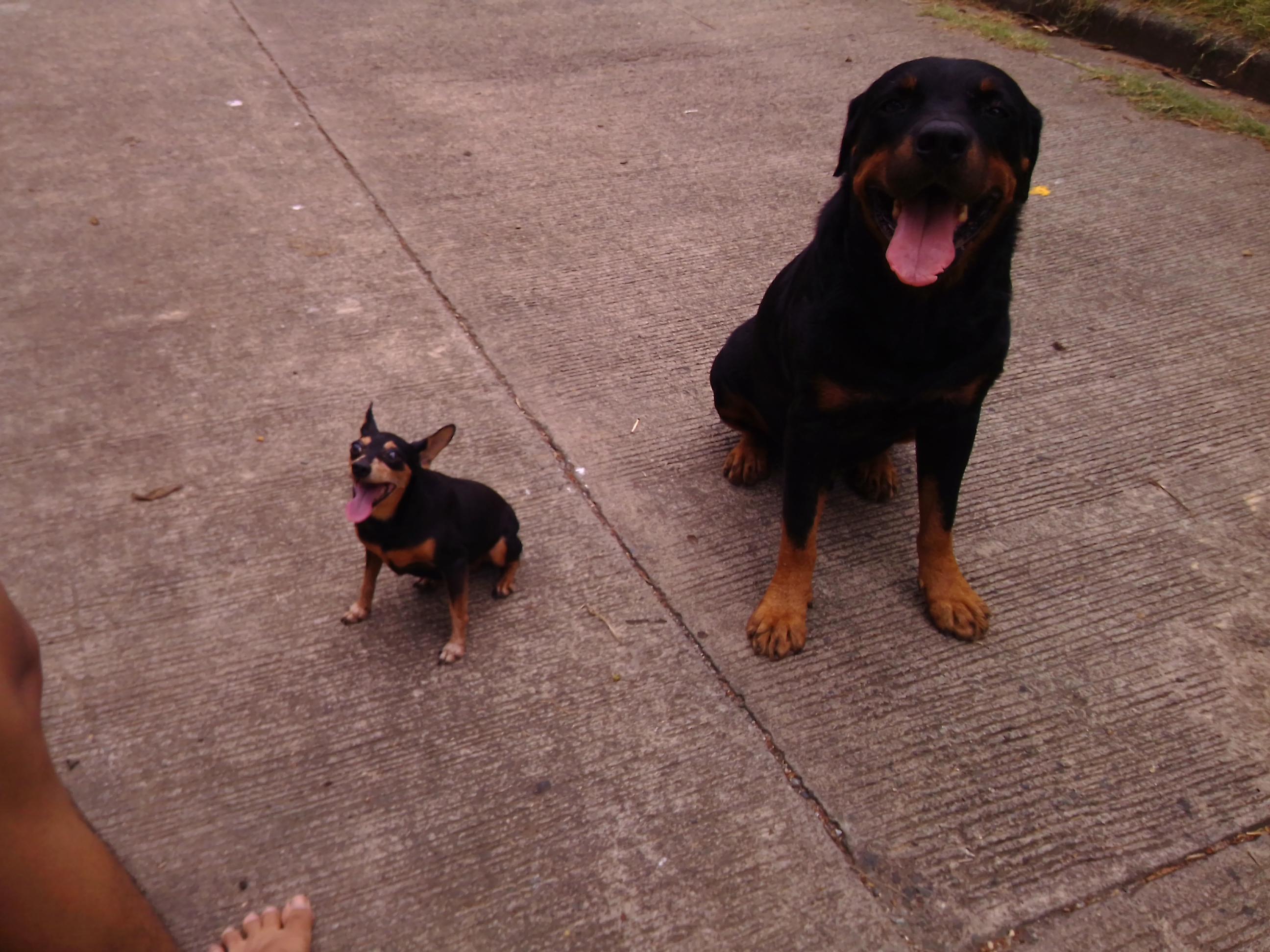 Iwa and Arf